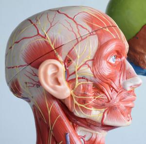 Botox for TMJ